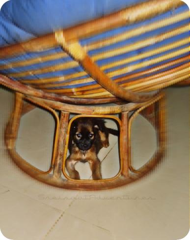 photo hunt joe under my rattan chair